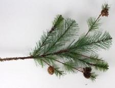 """23"""" Pine Spray /w Cones"""
