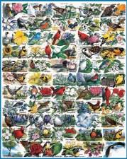 State Birds & Flowers - 1000 piece puzzle