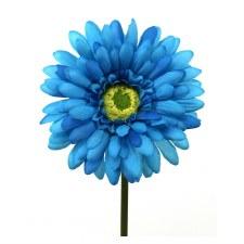 "Gerbera Daisy Stem, 18""- Turquoise"