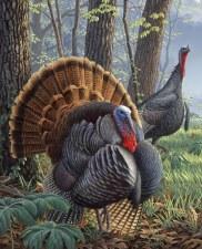 Nature & Wildlife Fabric Panel- Wild Turkey