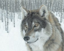 Nature & Wildlife Fabric Panel- Wolf in Aspens