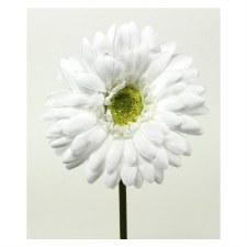 "Gerbera Daisy Stem, 18""- White"