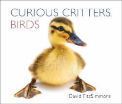 Curious Critters Birds