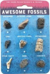 Compact Curiosities Fossil Car
