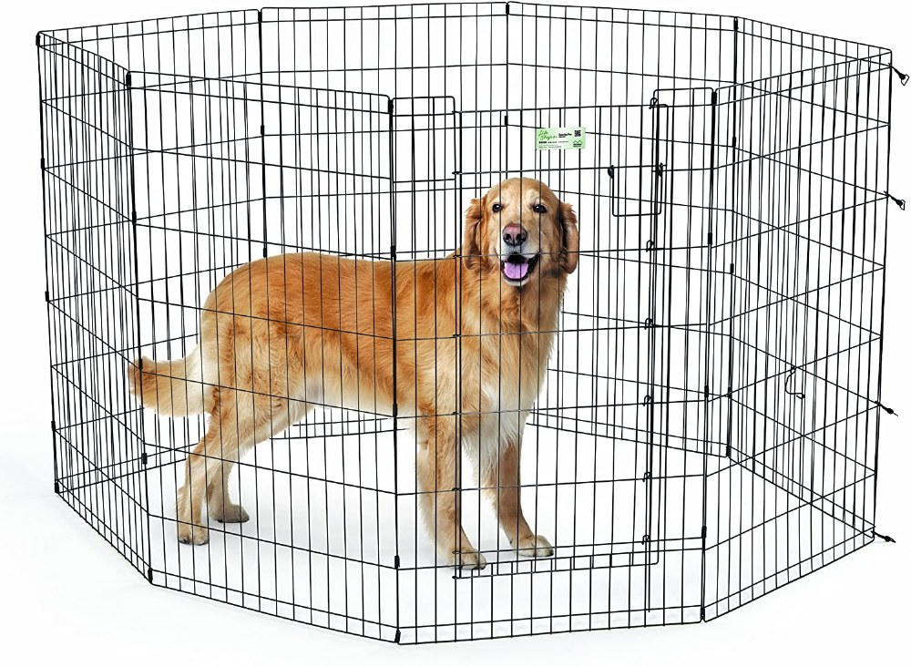 42In Exercise Pen