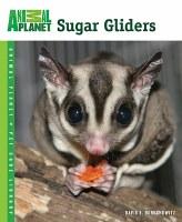 Sugar Gliders Paperback Book