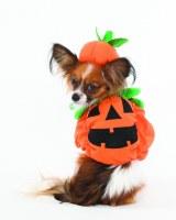 Sml Halloween Pumpkin Costume