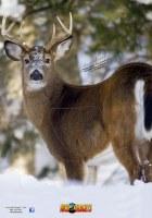 Nice Targets Deer