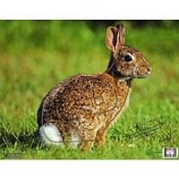 Nice Targets Rabbit Target