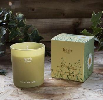 Herb Dublin Candle Dotey Daisies & Cut Grass