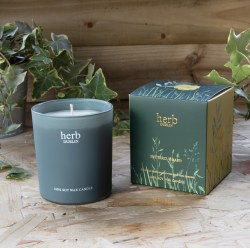 Herb Dublin Candle Buttercup Baby