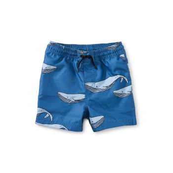 Azure Whale Baby Trunks 3-6M