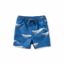 Azure Whale Baby Trunks 6-9M