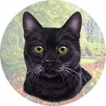 BLACK CAT CAR COASTER