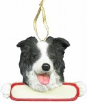 BORDER COLLIE WITH PLAQUE