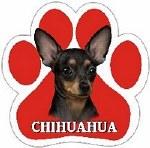 BLACK CHIHUAHUA MAGNET