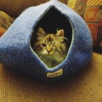 Yeti Pet Cave Cat Blue
