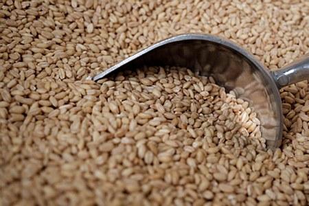 Shelled Wheat