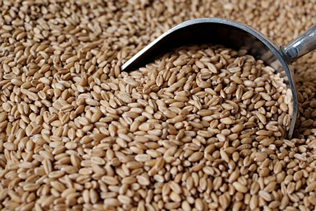 Shelled Wheat 1 lb