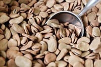 Extra Large Fava Beans 1 lb