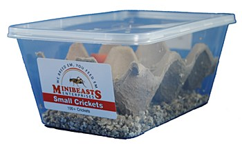 Minibeasts Crickets Small Live Reptile Food
