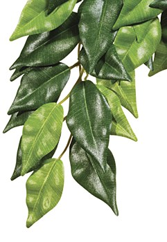 Exo Terra Forest Plant Ficus Medium