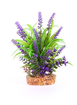 Kazoo Plant Combination Thin Leaf with Purple Flower 20cm