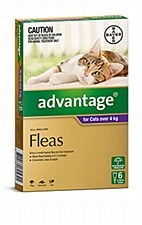 Advantage for Cats 4kg and larger (6 Pack)