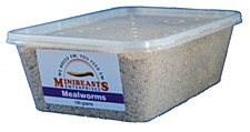 Minibeasts Mealworms 100g Live Reptile Food