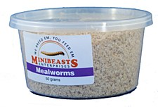 Minibeasts Mealworms 50g Live Reptile Food