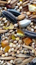 Avigrain Premium Breeders Small Parrot Mix 10kg Bird Food