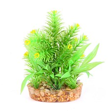 Kazoo Bush Combination with Yellow Flower 20cm