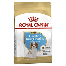 Royal Canin Cavalier King Charles Junior 1.5kg Dry Dog Food