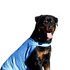Aussie Dog Wet Vest Extra Large 50cm