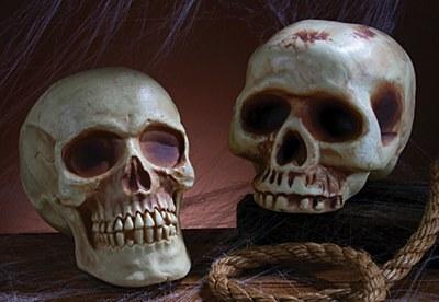 Realistic Skull Prop