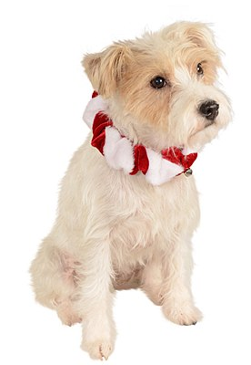 Candy Cane Bell Pet Collar