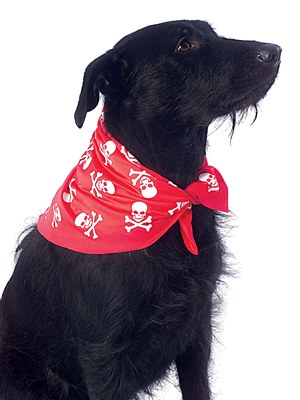 Skull And Bones Pet Bandana
