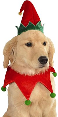Elf Pet Costume Set