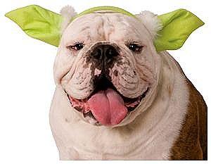 Star Wars Yoda Pet Ear Headband