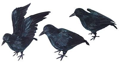 Crow / Raven Bird