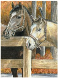 Color Pencil by Number: Buck's Pal