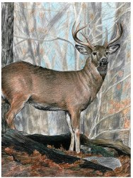 Color Pencil by Number: Whitetail Buck