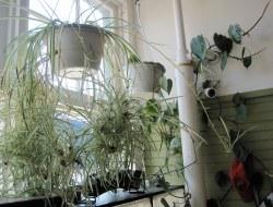 Free Plant Propagation Kit