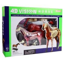 4D Horse Anatomy