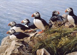 Bright Day - Puffins -1000pc