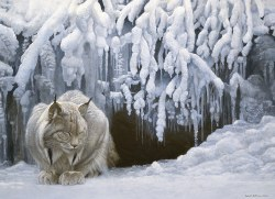 Dozing Lynx 1000pc