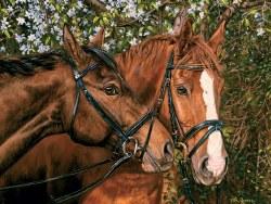 Friends Forever - Horses 275pc