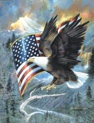 American Eagle 500pc