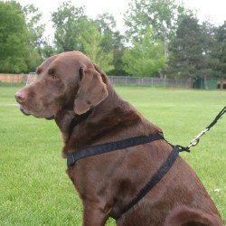 "Good Dog - Hemp Corduroy Harness - Black - 3/4"" Medium"