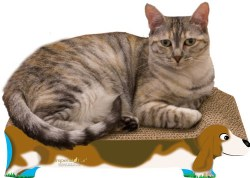 Imperial Cat - Cardboard Scratcher - Beagle - Small